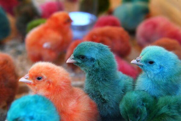 Крашеные цыплята на IV всероссийском фестиале Скорлупино