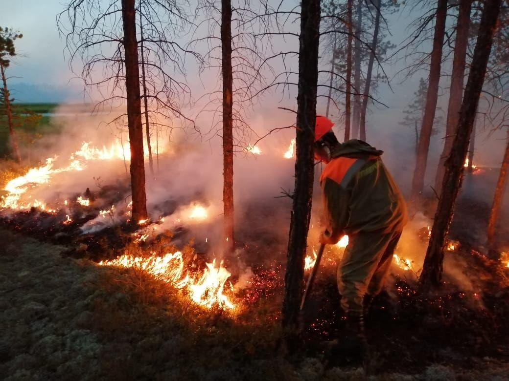 Почему число пожаров падает, а их площадь растет?