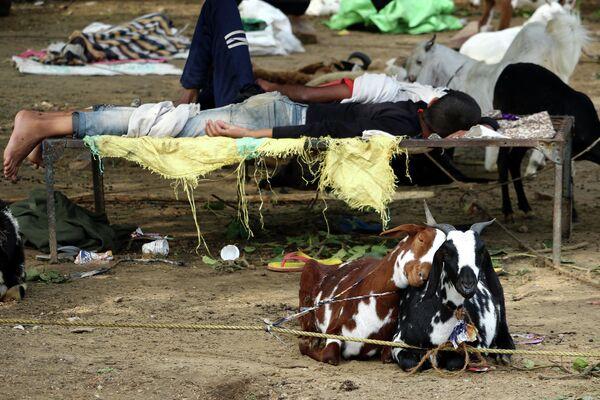 Связанные козы сидят рядом пока продавцы спят неподалеку от рынка в штате Раджастхан