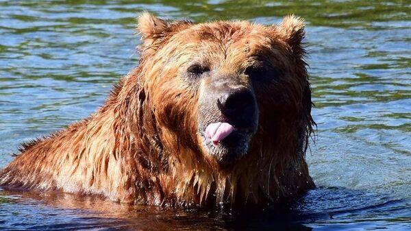 Посадил медведь коноплю аллергия на марихуану