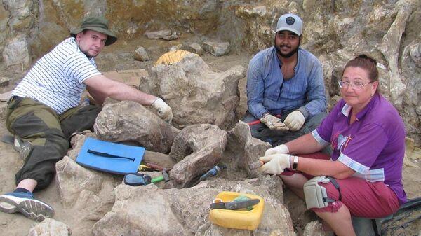 Череп кавказского эласмотерия, найденный на Таманском полуострове