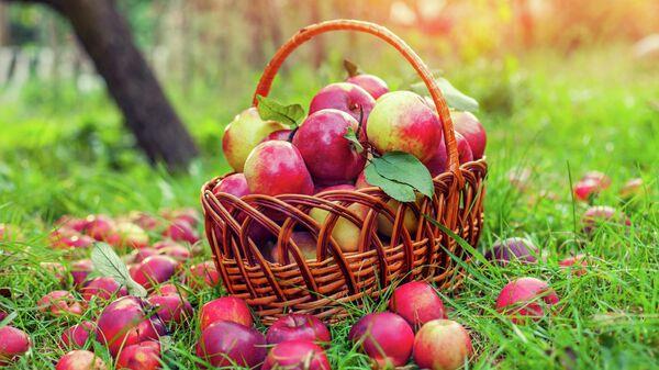 Корзина с красными яблоками