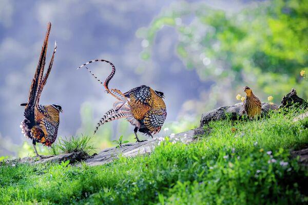 Работа фотографа Hu Yi, занявшая третье место в категории Поведение птиц в фотоконкурсе Bird Photographer of the Year 2019