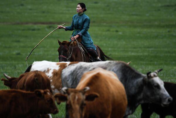 Монгольская женщина-пастух