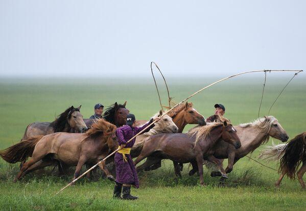 Коневоды в монгольской степи