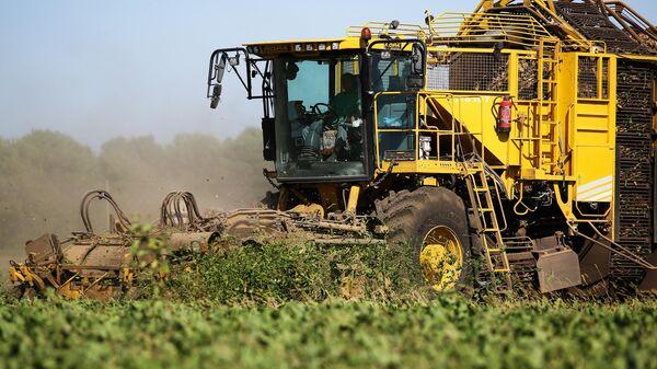 Свеклоуборочный бункерный комбайн ROPA euro-Tiger V8-4 во время сборка урожая сахарной свеклы