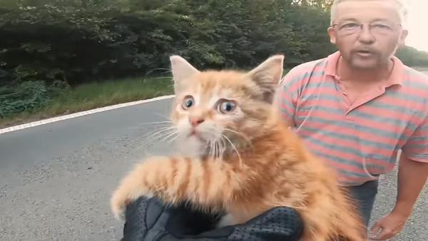 Спасение котенка в Бельгии
