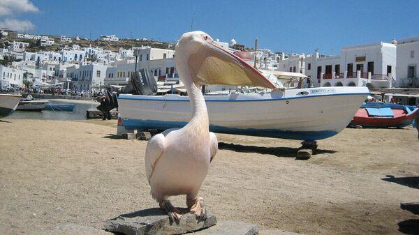 Туристы смогут добираться до греческих островов на гидросамолетах