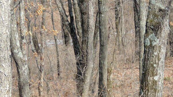 Снимок с невидимым леопардом, сделанный в национальном парке Земля леопарда