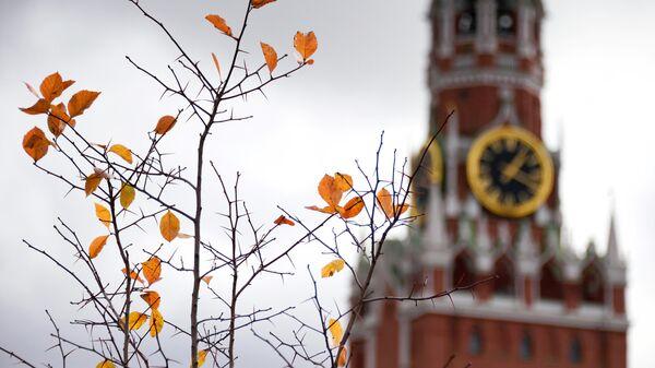 Куст с опавшей листвой на Красной площади