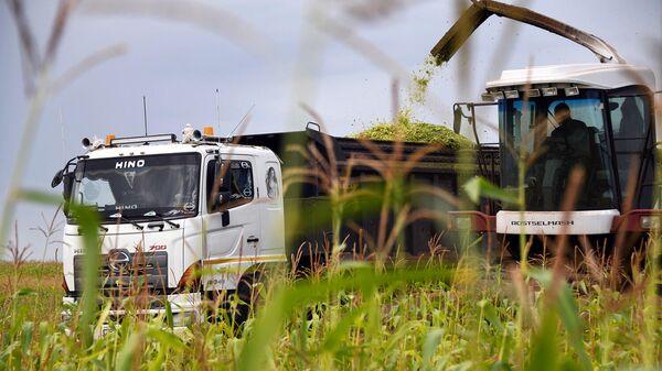 Заготовка силоса на сельскохозяйственных полях