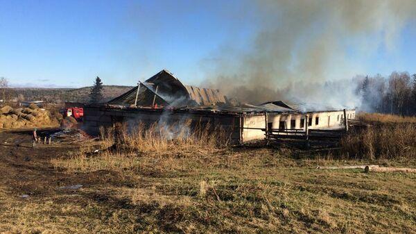 Пожар в коровнике в Красноярском крае