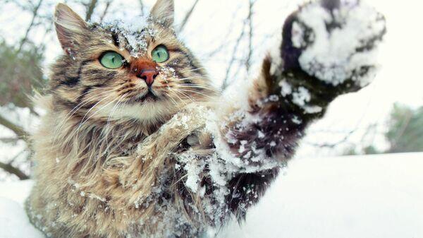 Кошка играет в снегу