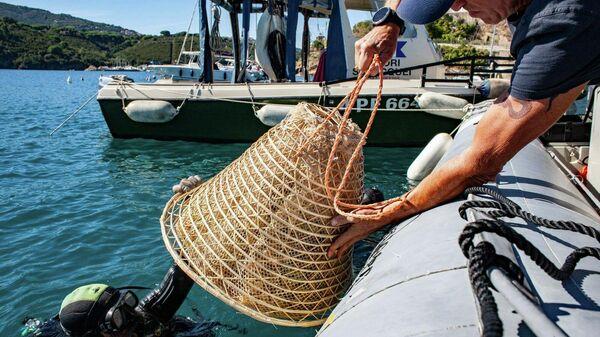 Виноград, выдержанный в морской воде близ острова Эльба