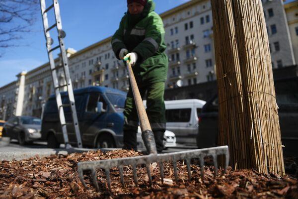 Работник коммунальной службы ровняет щепу на клумбе у дерева на Тверской улице в Москве
