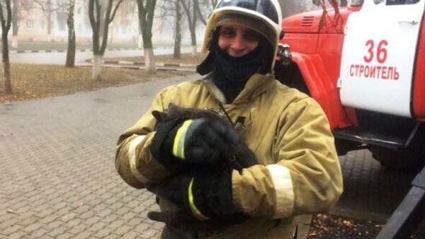В городе Строитель, Белгородской области,  пожарные помогли снять с дерева испуганную кошку