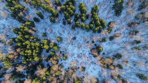 Смешанный лес зимой