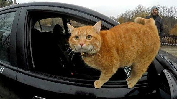 Кот и такси: водитель из Харькова взял себе хвостатого напарника