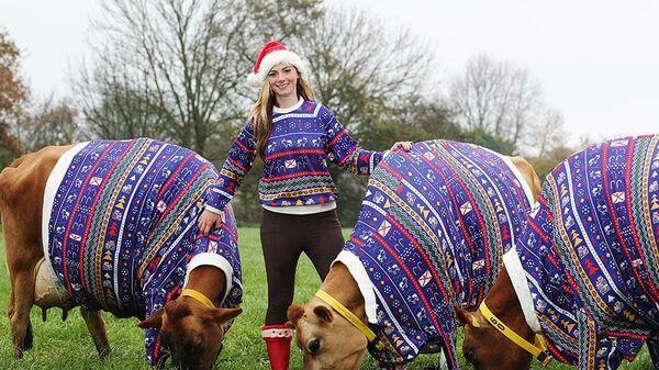 Фермер Бекки Хауз с коровами, наряженными в праздничные свитера с рождественской тематикой