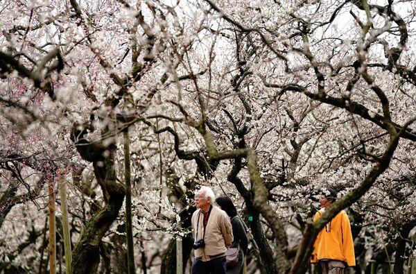 Посетители в парке Кайракуен, Мито, Ибараки, Япония