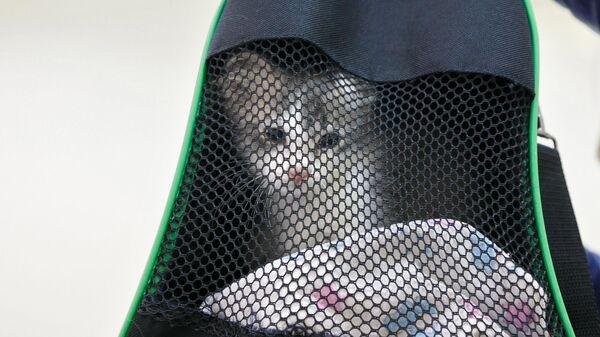Котенок в переноске