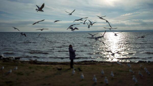 Женщина кормит чаек на берегу Керченского пролива