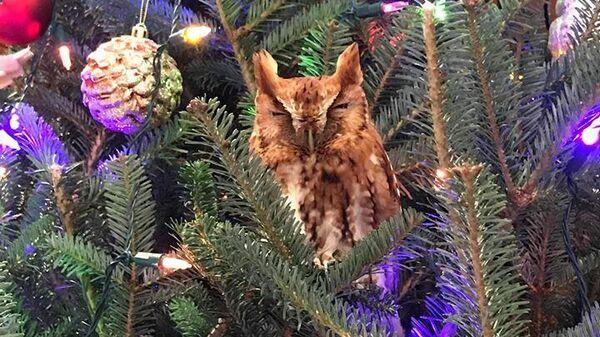 Сова в рождественской елке