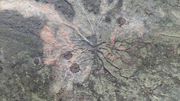 Ученые нашли древнейший ископаемый лес на планете