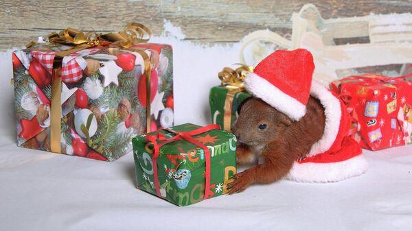Белка с новогодними подарками