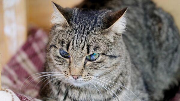 Кошка на территории приюта для бездомных животных