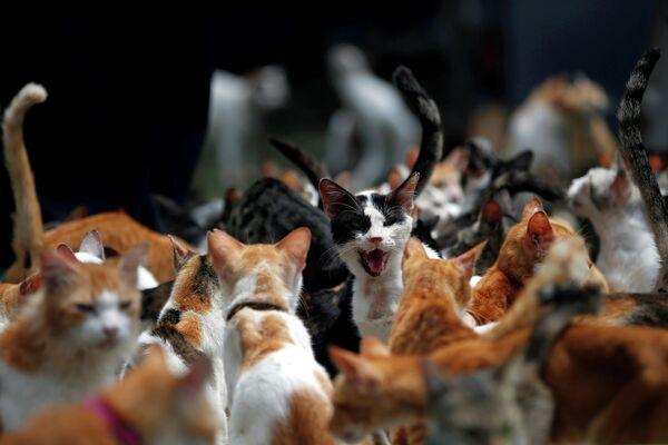 Кошки во время кормления в приюте для кошек в Богоре, Индонезия