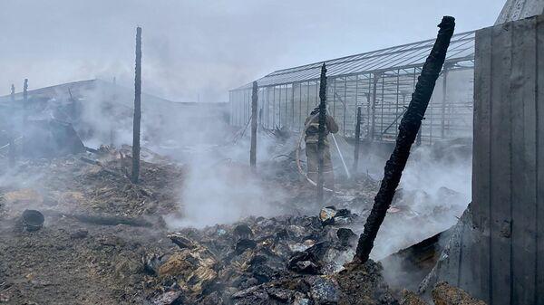 Сотрудники МЧС РФ на тушении пожара на территории тепличного комплекса в деревне Нестерово в Московской области