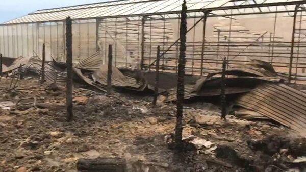 Кадры с места пожара в тепличном хозяйстве Подмосковья