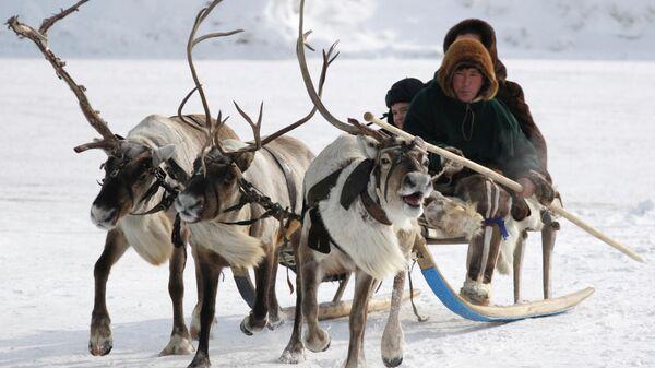 Представители коренных малочисленных народов Югры на оленьей упряжке
