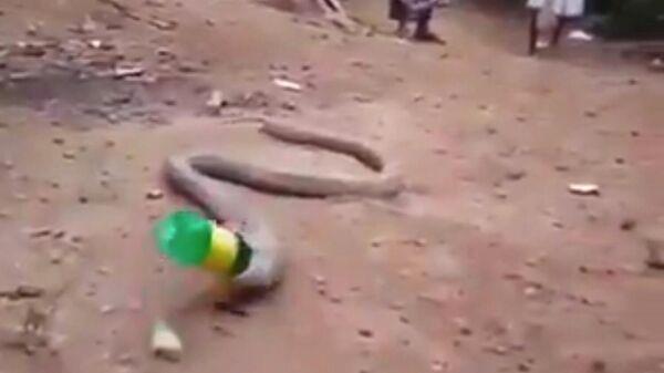 Змея, проглотившая бутылку