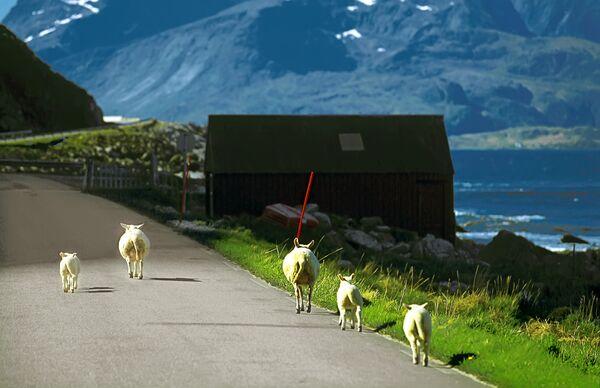 Дорога на севере Норвегии