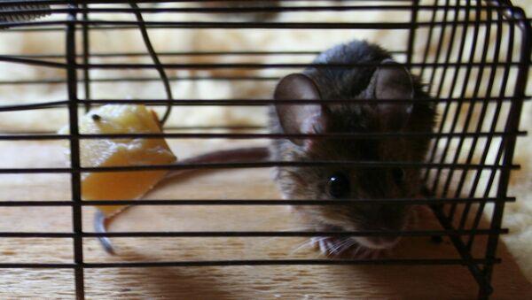 Ученые выявили ген, блокировка которого предотвращает ожирение у мышей