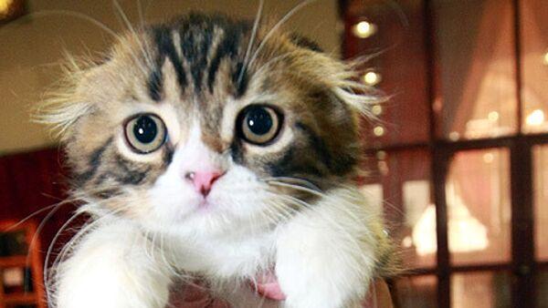 Томич, не заплативший штраф, предложил приставам арестовать котенка