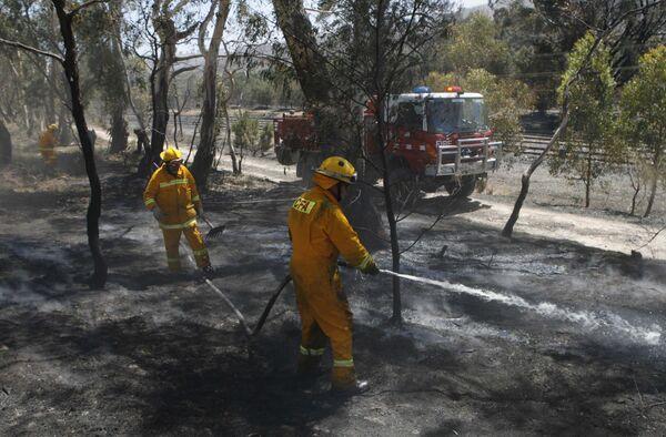 Полиция Австралии освободила подозреваемых в поджогах леса