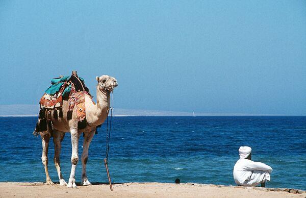 На берегу Красного моря в Египте