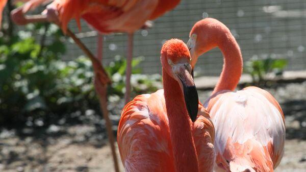 Розовые и красные фламинго в Московском зоопарке
