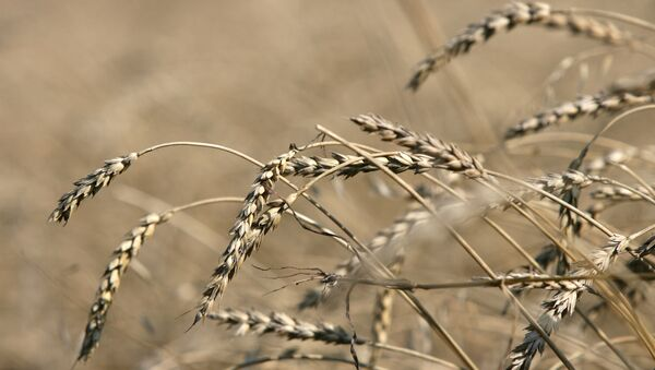 Уборка зерновых. Архив