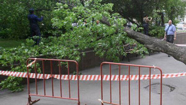 Упавшее после урагана дерево. Архивное фото