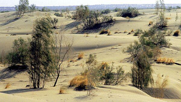 Засадка лесом Каракумской пустыни