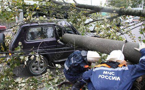 Ликвидация последствий штормового ветра в Калининграде