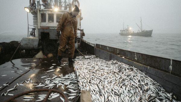 Улов рыбы на траулере рыболовецкого хозяйства