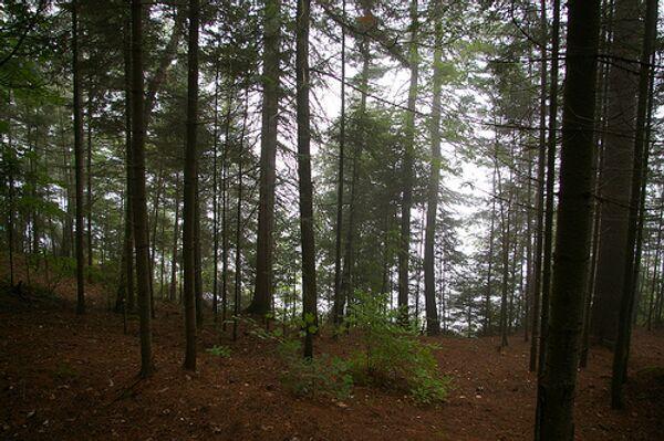 Лес в Канаде. Архив