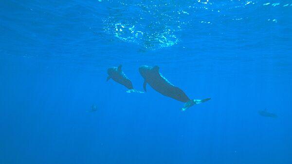 Японцы против награждения Оскаром фильма об охоте на дельфинов
