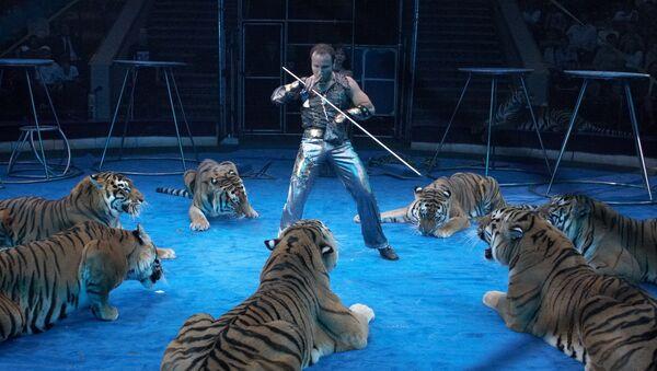 Артур Багдасаров с усурийскими тиграми. Архив