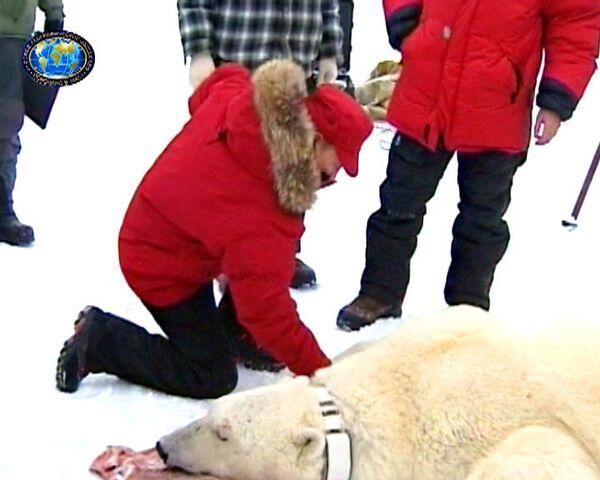 Путин пожал лапу белому медведю и объявил уборку в Арктике
